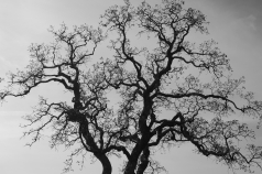 31_Tree_Fractal_Hi_Res