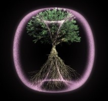 WEB_Still_Tree_A_02