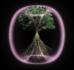 WEB_Still_Tree_A_02