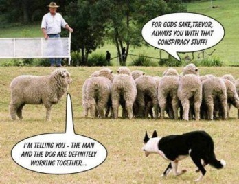 conspiracy-theory-sheep